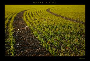 Tracks In Field by kraeos