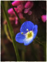 Gentle bravery... by Ikabe