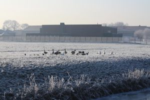 Ice landscape Diksmuide 13 by carinaD-stock