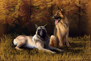 K-9 Dogs by WindSeeker