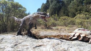 Ceratosaurus reaching carcass by Krulos