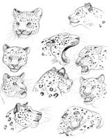 Leopard Studies by Nightenscythe