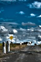 Cattle Crossing by GrantDixon