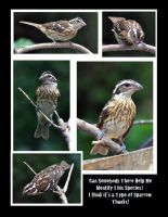 Composite of a Baby Rose Breasted Grosbeak by richardcgreen