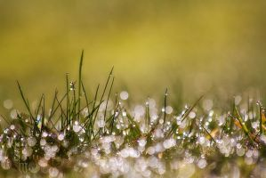 Morning Dew by WhiteSpiritWolf