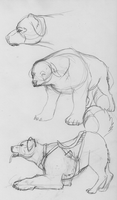 polarbear dog by bluedrgnMethy