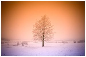 Winter postcard 2008 by mjagiellicz