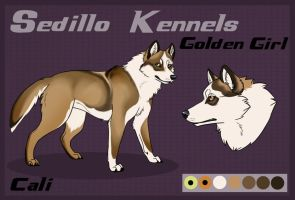 DBK's Golden Girl: Cali by Sedillo-Kennels