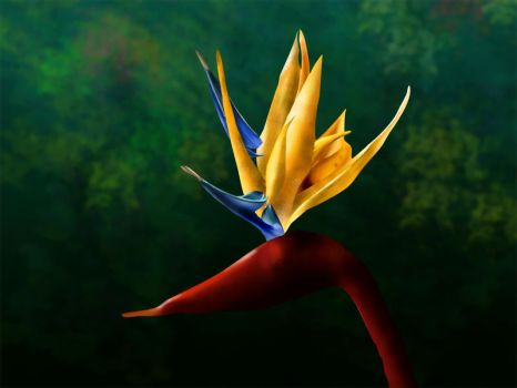 Bird of Paradise 002 by Wildfire47