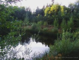 Evening At the Pond by cjosborn