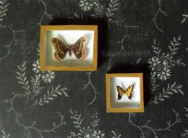 Miniature Riker Mounts - Moth and Butterfly by Kyle-Lefort