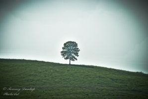 one tree three by Tommy8250