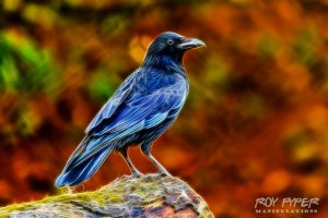 Crow: Fractalius Re-Edit by nerdboy69