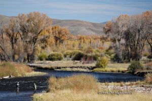 Fly Fishing by HighCountryImages