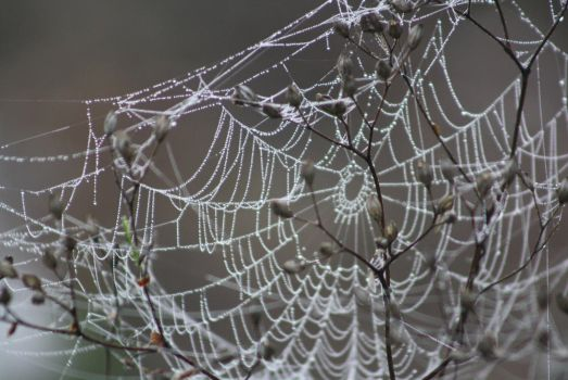 Spiderweb by Jullise
