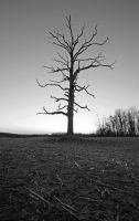 The Tree of Woe by Hertz18360