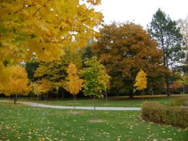 Canadian Fall Colours 48 by Aswang301