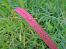 Pink Grass by irrationalrationale