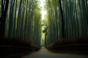 Bamboo forest by DamphireX