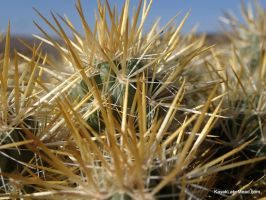 Golden Cholla Needles Upclose by ClymberPaddler
