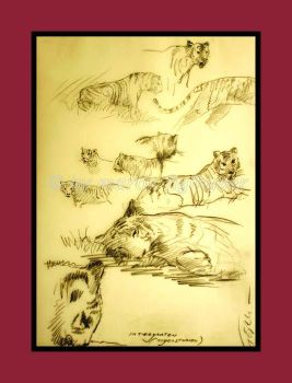 studies of tigers 03 by figlhuber