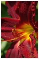2009 Olbrich Gardens 16 by scottalynch