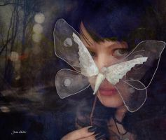 Butterfly by jhutter