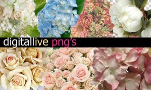 PNG flowers by digitallive