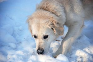 Snow Search by Nikki-vdp