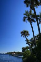 Palm tree, sky and water by elf-fu-stock