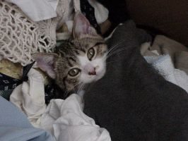 Buried in Clothes by cat-lovers