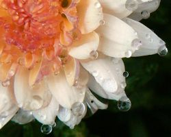 water drops on the flower by thetoddclan