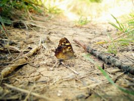 Butterfly by Leaves-in-the-wind