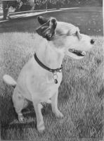 Zappo - The Jack Russel by HannaKarlsson