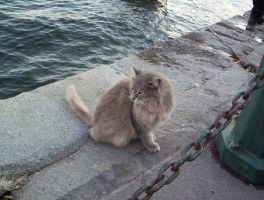king of the bosphorus by yalchinosis