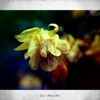 Colorfull Poetry by Cixipod