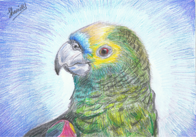 Parrot by ConkerTSquirrel