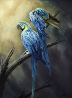 Macaws by Krats