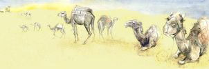 Camels of Tunisia by amwah