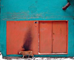 the door and the cat by ugurers