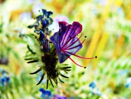 colorful by nicelandscape