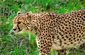Prowl by Momenti-Photo
