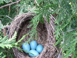 Blue Eggs by fairybeliever87