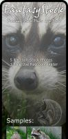 Racoon Stock Photo Zip Pack by FantasyStock