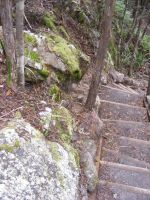 Stairs Through Woods 05 by Gracies-Stock