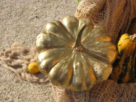 Variety 50 or pumpkin decoration? by Faunamelitensis