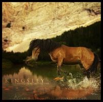 Kingsley by candid-crocodiles