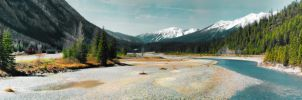 Kicking Horse in Field, BC by skip2000