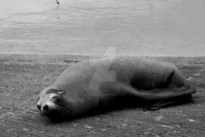 Seal 2 by IllusionsGlade