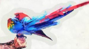 Macaw watercolors 01 by rhythmichysteria